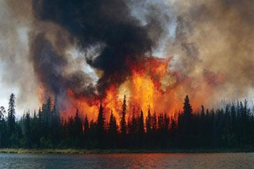 Image of a burning forest.